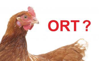 Tìm hiểu bệnh ORT trên gà